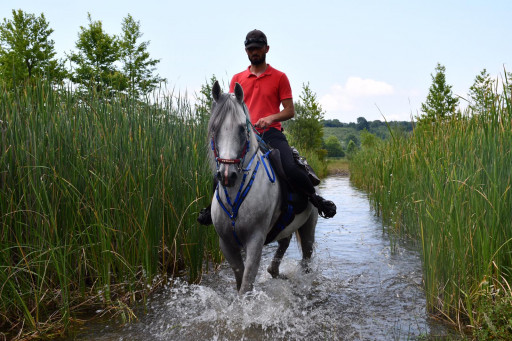 Equestrian Tour In Sapanca Halfday