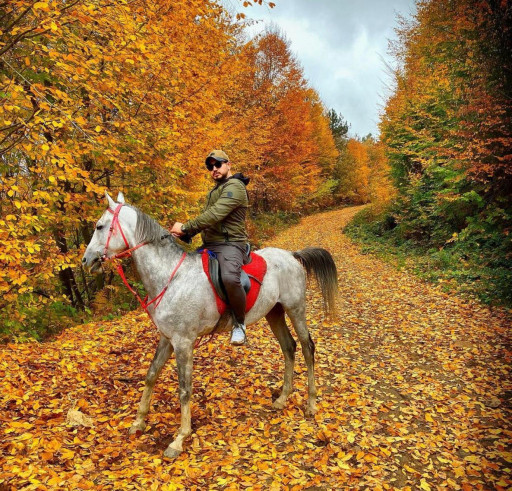 Horseback Riding in İstanbul Beykoz Forests, Fullday